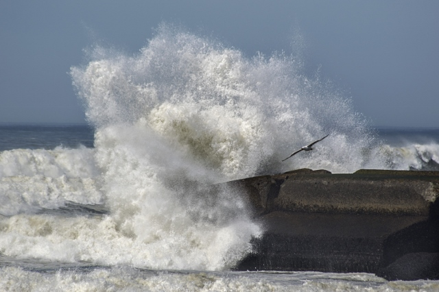 Gull Amid Crashing Waves 041716pp