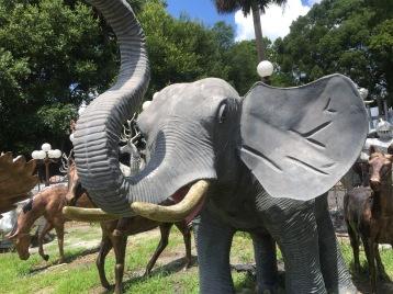 bv elephant